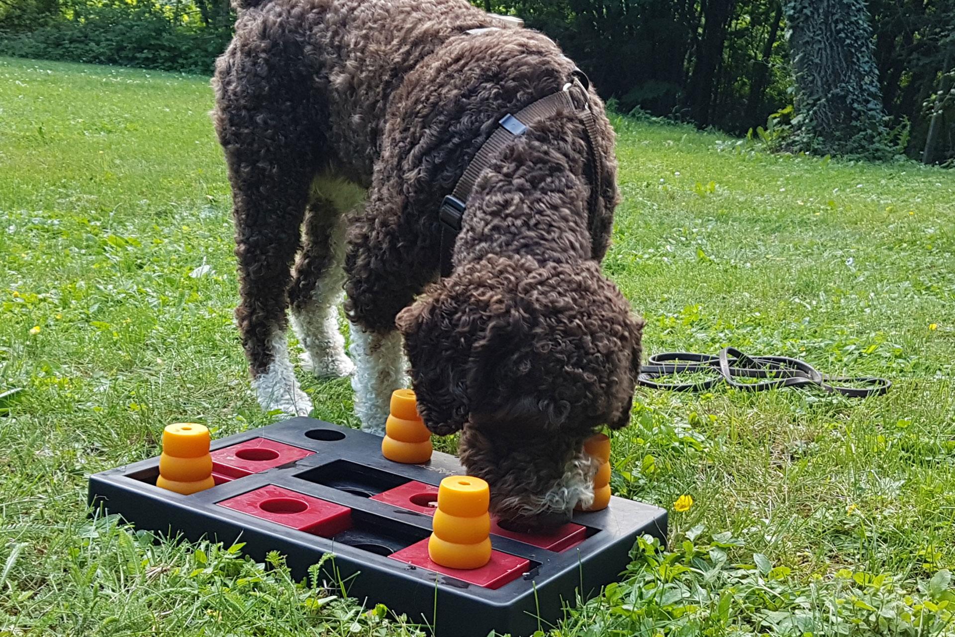 Hundeschule Workshops Seminare Schnüffelspiele
